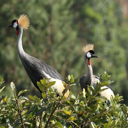 Wildlife Viewing Safaris