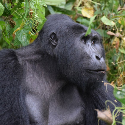 Bwindi Impenetrable Forest Top Destionation