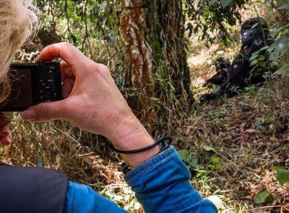 Mountain Gorilla Trekking Experience