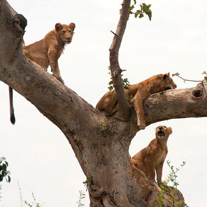 KIbale Forest Top Destionation