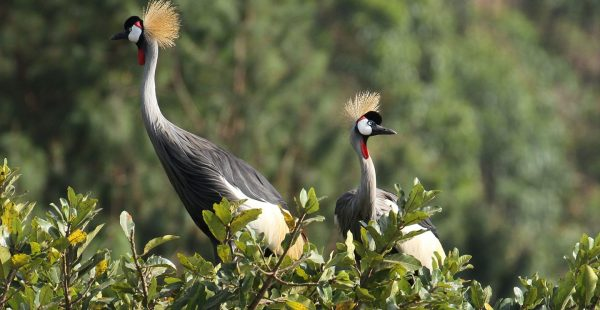 Go Bird watching tours Uganda