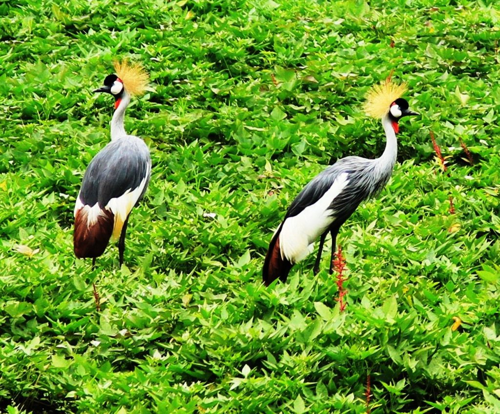 Bird watching in Uganda's Lake Mburo National Park