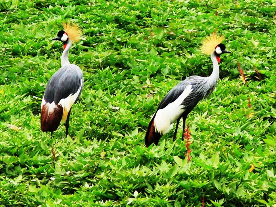 Bird watching in Uganda's Lake Mburo National Park