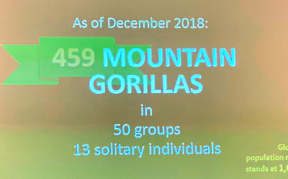 Mountain Gorilla Census Results