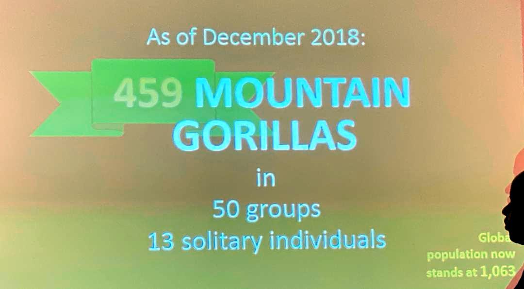 Mountain Gorilla Census Results