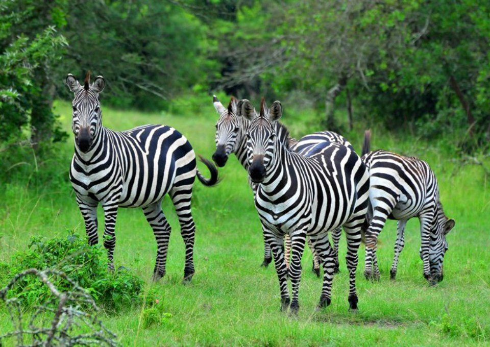 Lake Mburo National Park, home of the zebras