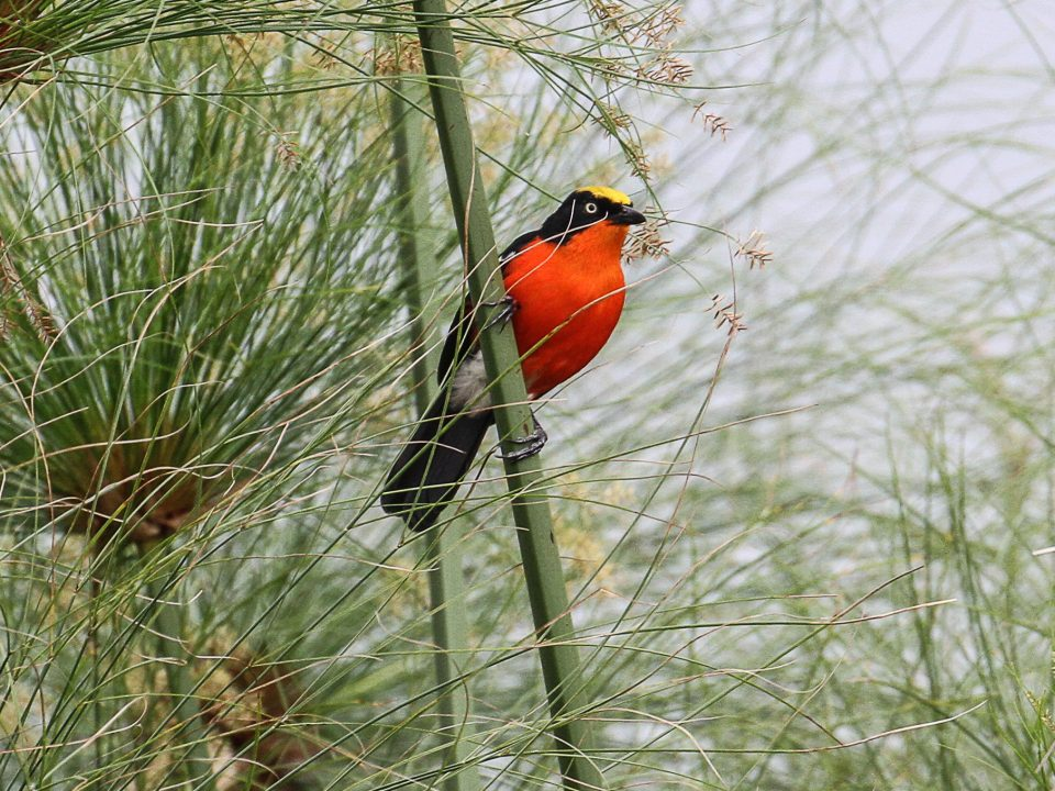 Top 10 birds to see in Uganda