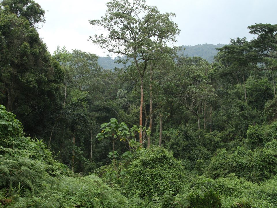 Bwindi Impenetrable National Park forest view