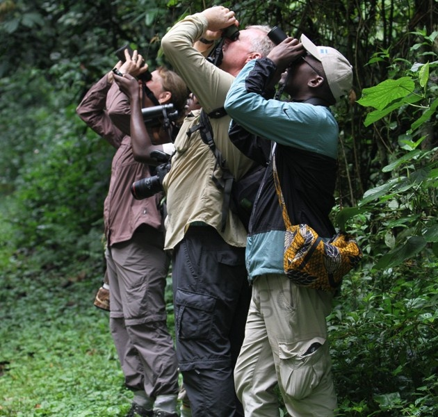Bird Watching in Bwindi