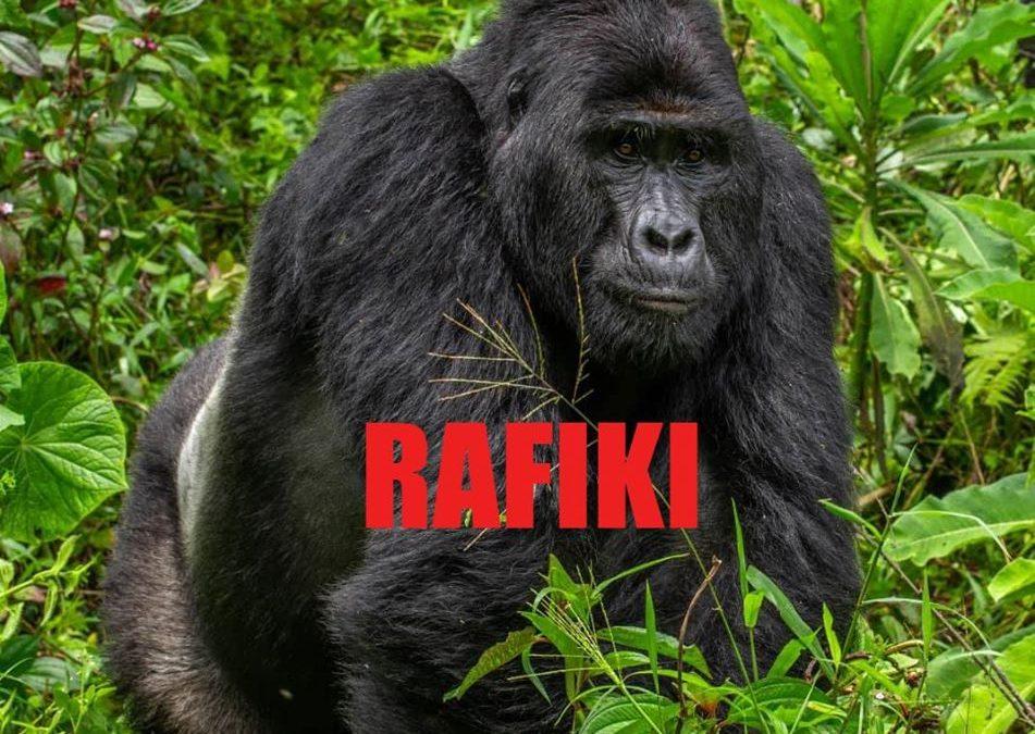 UWA arrests four over murder of Silverback Gorilla: