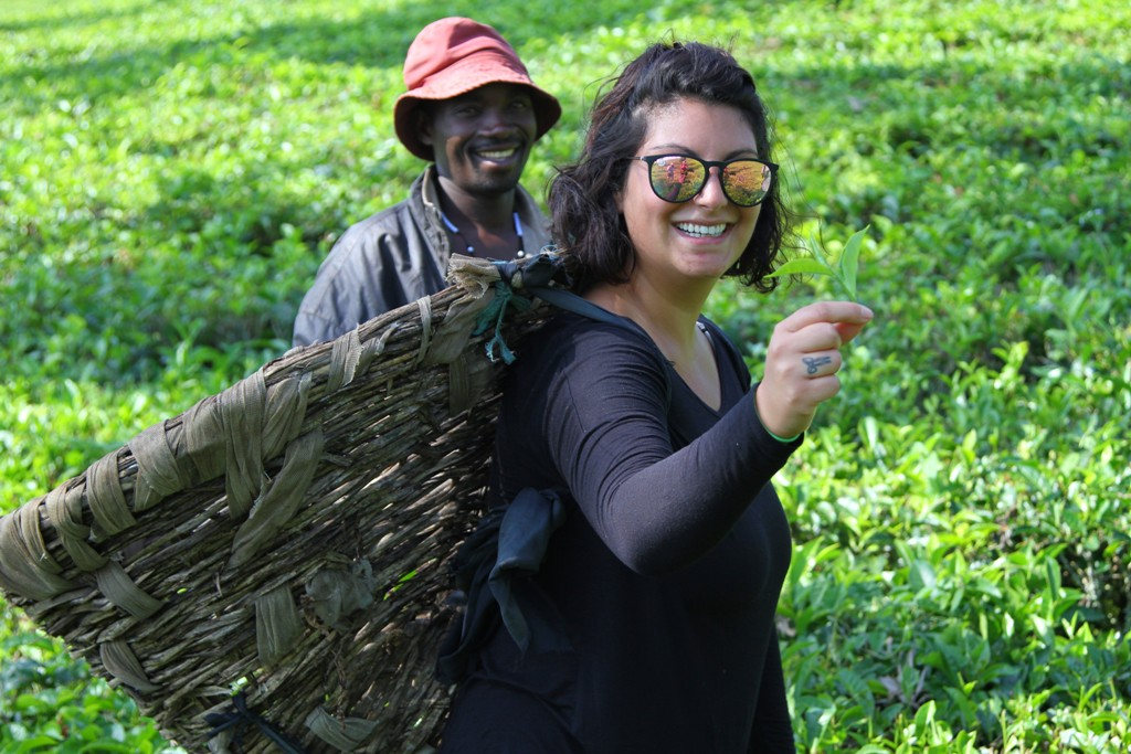Fort Portal, the adventure capital of Uganda - tea harvesting