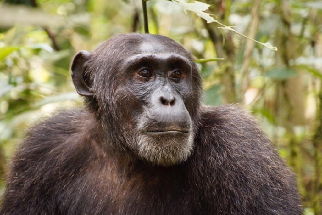 Uganda opens National Parks for tourism